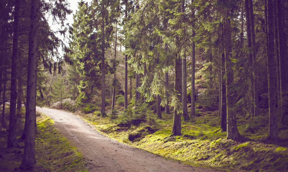 evoke different sentiments background images forest woods