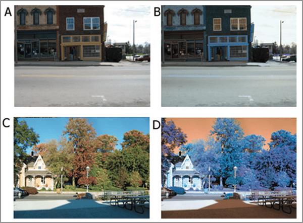 color perception experiment