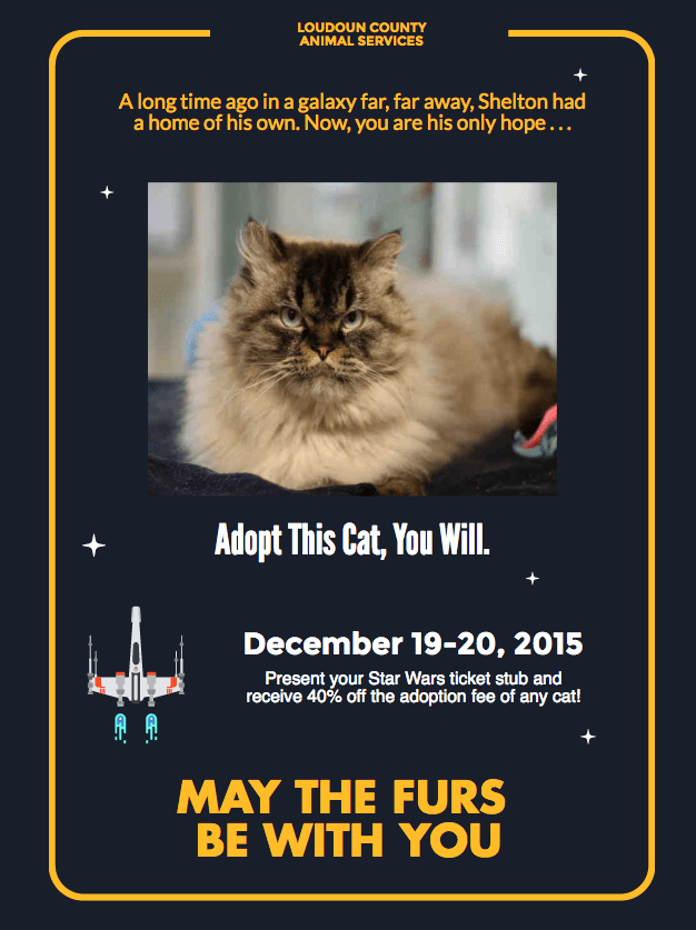 cat-adoption-poster-3984382